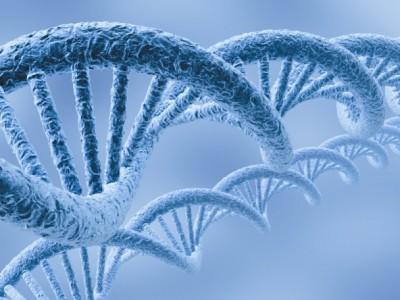 ¿Cual es el papel de la predisposición genética?