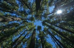 Mientras que los cultivos anuales proporcionan un cierto secuestro de carbono a corto plazo, los árboles grandes y viejos son mucho más importantes en términos globales