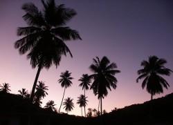 El crepúsculo es una parte importante de los ritmos circadianos de muchas plantas (© MeckiMac)