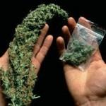 marihuana mano