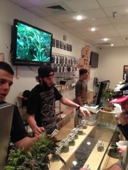 Tres empleados masculinos detrás de un mostrador de vidrio en un dispensario de cannabis en Colorado