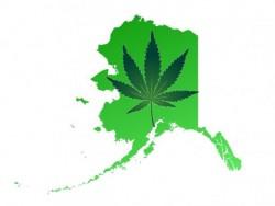 Alaska Cannabis Legalization Sensi Seeds Blog