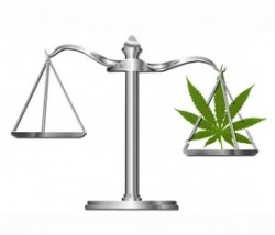 legaler Status von Cannabis Sensi Seeds blog