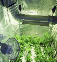 Las condiciones ambientales son cruciales para un cultivo exitoso