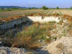 Se quieren recuperar los antiguos campos dedicados al cultivo de cáñamo en la huerta de Orihuela, en la Vega Baja del Segura (©José Manuel Sanz)