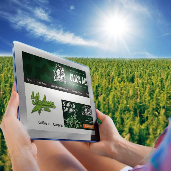 cannabis communities per region SPAIN