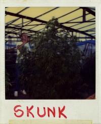 Ben trabajando en su invernadero en 1983.