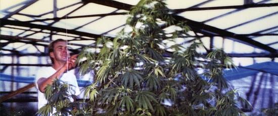 ben-in-greenhouse-banner