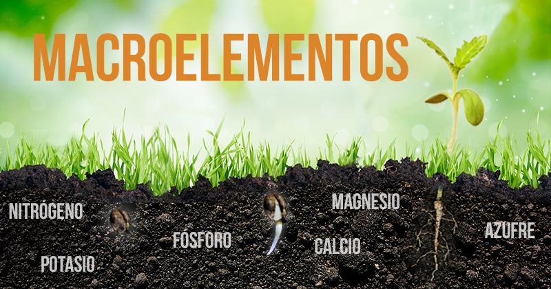 Nutrici n mineral para el cannabis los macroelementos for Que elementos conforman el suelo