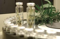 Sativex de GW Pharmaceuticals es la primera extracción de toda la planta autorizada para la venta