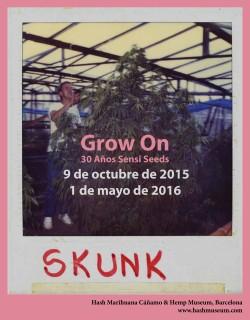 Grow On Sensi Seeds