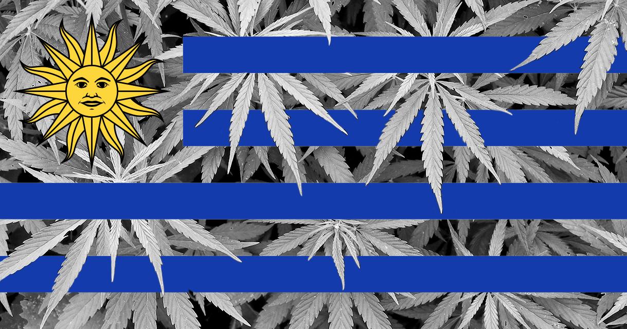 LEGAL - Cannabis in apotheek Uruguay
