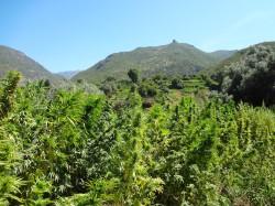 Las Cataratas de Akchour, Fuente de Vida - Sensi Seeds blog