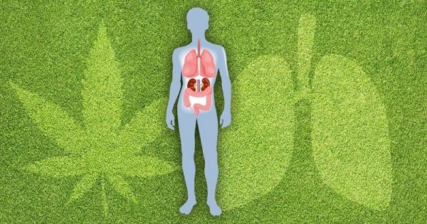 cystic fibrosis - Sensi Seeds blog