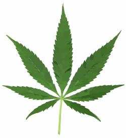 Alemania, al igual que los Países Bajos y Canadá, va a crear una Agencia del Cannabis con el fin de cuidar y ocuparse de sus propios pacientes en el futuro.