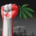 Canadá de camino hacia la legalización del cannabis