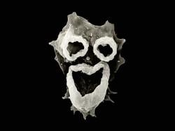 "¡Hola! ¡Me voy a comer tu cerebro! (N. fowleri ""brain-eating"" amoeba, © imgur.com)"