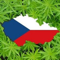 La République Tchèque veut légaliser le cannabis médicinal