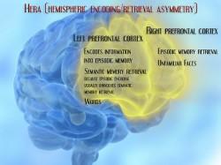 Le cortex préfrontal a un rôle vital à jouer dans la formation et l'encodage de la mémoire épisodique (© Laura B. Dahl).