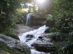 De nombreux arbres de la forêt équatoriale humide fleurissent de manière synchrone, même lorsqu'il n'y a pas de modification de la photopériode