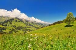 On estime que le cannabis est présent en Suisse depuis 6500 ans au moins (© Tambako the Jaguar)