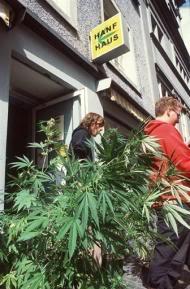 Bien que de nombreuses boutiques suisses vendant du chanvre aient dû fermer, il en reste près de 135, en majeure partie à Zurich