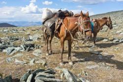 L'équitation occupe encore une place centrale dans la vie des populations du plateau de l'Oukok (© Zabaraorg).