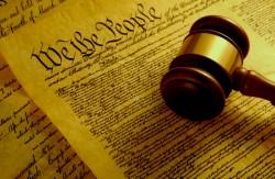 american constitution sensi seeds blog