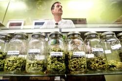 très prochainement, des dispensaires de cannabis comme celui-ci vont être créés en Oregon, en Alaska et dans la ville de Washington.