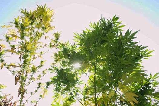 07_dreamtree_outdoor_res