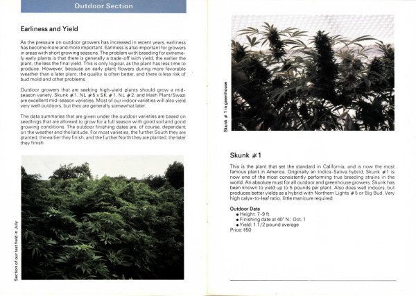 001_SENSI_SEEDS_Strains_that_made_our_brand