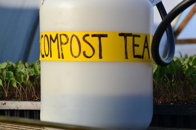 Le thé de compost
