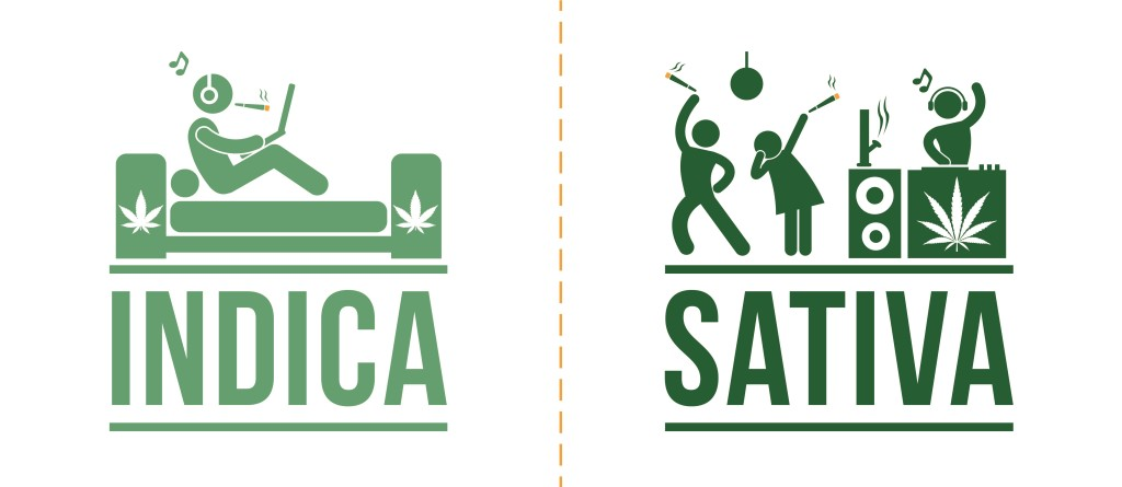 The difference between Indica and Sativa - the effect