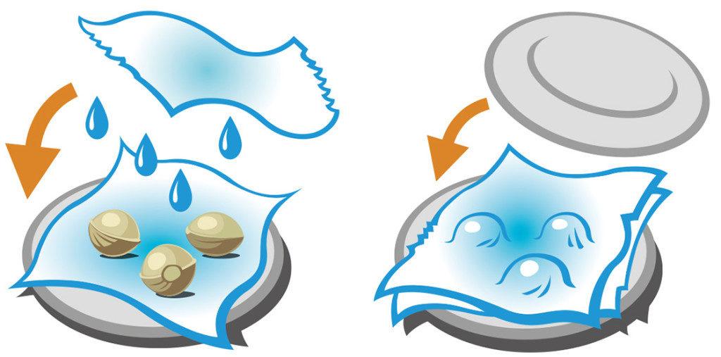 Gráfico que representa el proceso de germinación de las semillas. La primera parte de la imagen muestra un plato inferior cubierto de papel de cocina húmedo con unas semillas colocadas encima. Por encima de las semillas, hay otro pañuelo de papel o papel de cocina húmedo que gotea agua. A la izquierda del plato, una flecha naranja dirige el papel que está por encima hacia abajo. En la segunda imagen, las semillas están cubiertas por el papel y un segundo plato boca abajo se dirige hacia abajo como indica una flecha naranja.