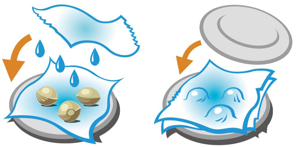 Imagem a descrever o processo de germinação de sementes. A primeira parte da imagem mostra um prato forrado com um lenço humedecido e com sementes por cima. Por cima das sementes paira outro lenço molhado que pinga água. À esquerda do prato, uma seta laranja indica que o lenço que paira deve ser colocado por cima. Na segunda imagem, as sementes estão cobertas pelo lenço e um segundo prato deve ser colocado por cima, virado para baixo, como é indicado pela seta laranja.