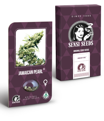 Jamaican Pearl