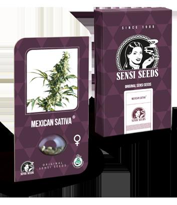 Semi di Mexican Sativa
