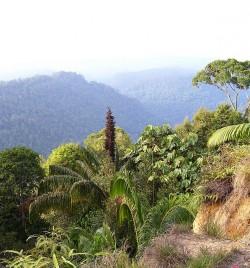 In plaats van ons te richten op een enkele 'wonderplant', is de sleutel tot klimaatregulering met op het land levende soorten het behouden en vergroten van de biodiversiteit