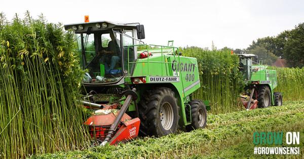 De oogstmachines van HempFlax in aktie.