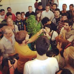 Een workshop over het kweken van cannabis voor persoonlijk gebruik.