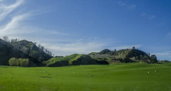 Het klimaat in Nieuw-Zeeland is ideaal voor cannabiscultivatie. (CC. Jaafar Alnasser)