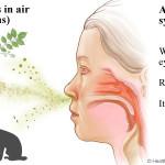 Czy można mieć alergię na konopie?