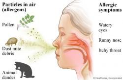 U osób wrażliwych, konopie mogą wywoływać takie objawy, jak nieżyt nosa